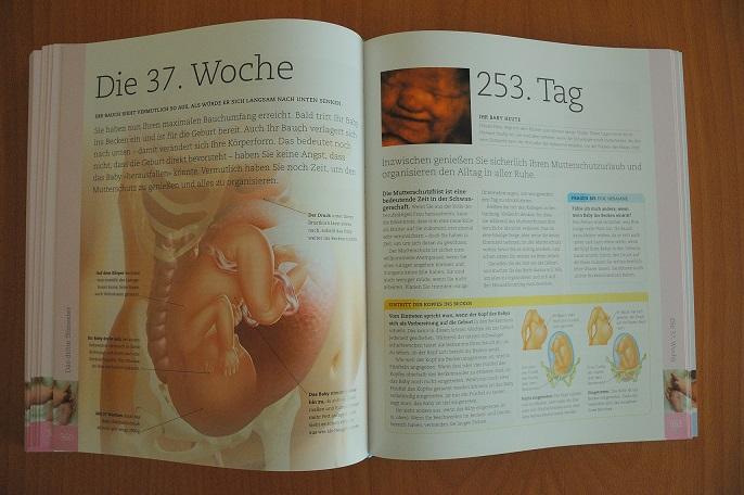 ein Muss f/ür werdende M/ütter Schwangerschaftsgurt f/ür Auto Sch/ützt das ungeborene Baby URAQT Sicherheitsgurt f/ür Schwangere Bauch Gurt f/ür Schwangere